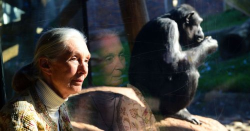 Jane Goodall reveals what studying chimpanzees teaches us about human nature