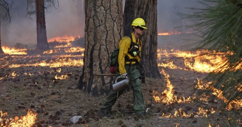 Saving the forest: Fighting fire with fire