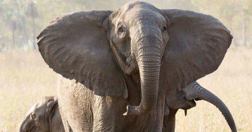 Poaching is altering the genetics of wild animals