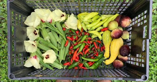 Three Gardening-Obsessed Austin Restaurants Share Their Tips for Growing Better Produce