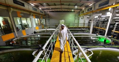 Fish farming is no environmental nightmare