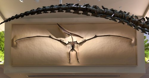 Pterandon: The fish-eating flying reptile with a 20' wingspan