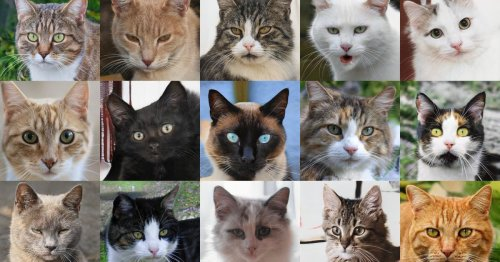 Soon, the internet will make its own cat photos and then it won't need us
