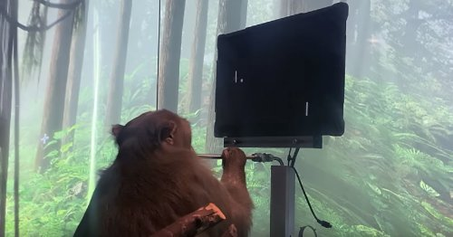 Watch: Elon Musk's Neuralink says this monkey is playing Pong with its mind