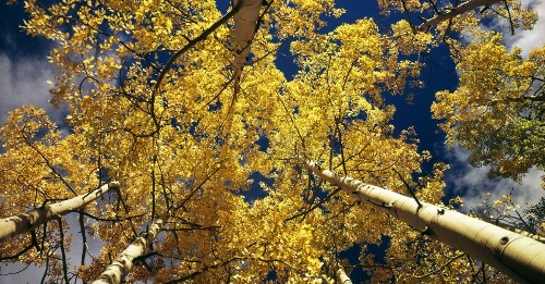 Pando is a 13,000,000 lb aspen that might be the oldest living thing on Earth