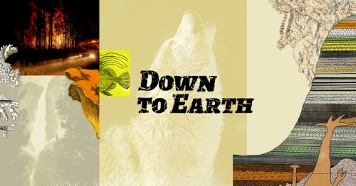 Introducing Down to Earth, our new project on the biodiversity crisis