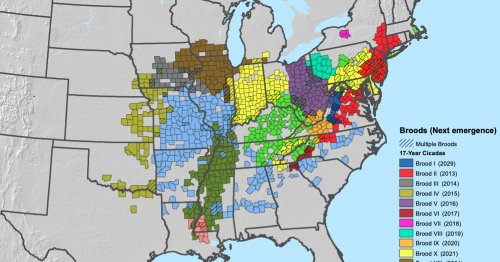 Where billions of cicadas will emerge this spring (and over the next decade), in one map