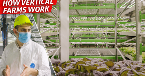 How This Vertical Farm Grows 80,000 Pounds of Produce per Week
