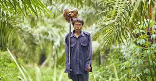 The Immense Human Cost of Keeping Thailand's Palm Oil Flowing