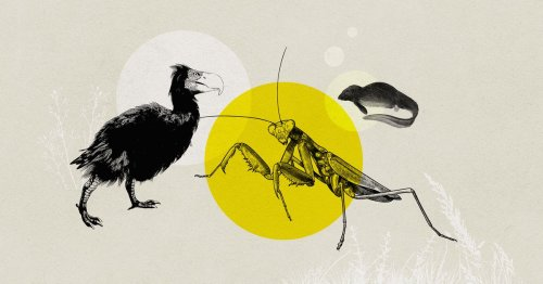 The animals that may exist in a million years, imagined by biologists