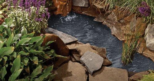 How to Create a Backyard Pond