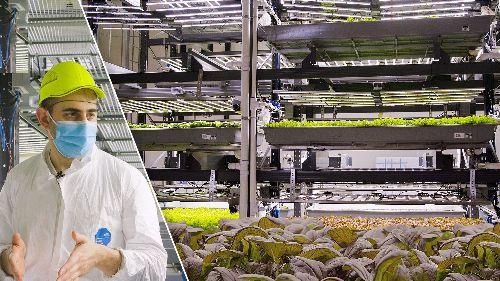 How an Indoor Farm Grows 80,000 lbs of Produce a Week