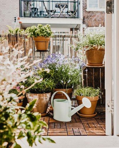 Een moestuin op het balkon, waarom niet? - vtwonen.nl