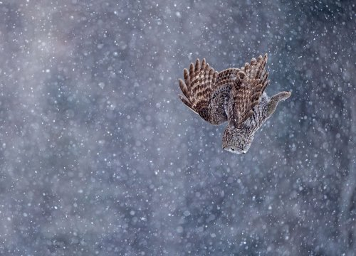 Wild Photos from the Bird Photographer of the Year Contest | The Weather Channel - Articles from The Weather Channel | weather.com
