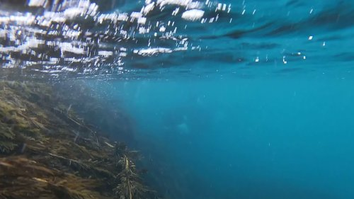 New Zealand Snorkeler Had Ultimate Killer Whale Encounter - Videos from The Weather Channel | weather.com