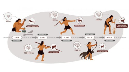 Our Human Ancestors Were Apex Predators that Mostly Ate Meat for 2 Million Years, Finds Study
