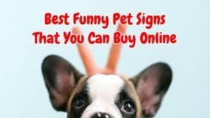 10 Best Funny Pet Signs That Will Make Your Mood