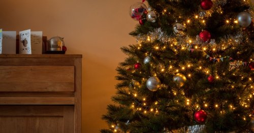 Junemas Trees are now on sale ahead of 2021's summer Christmas
