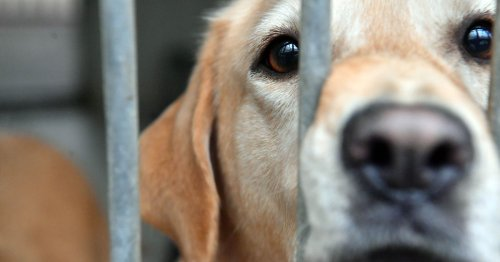 The Welsh rescue overrun with people handing in their dogs as 'fake strays'
