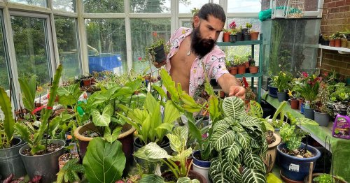 Green-fingered dad spends £6k turning home into an 'indoor jungle'