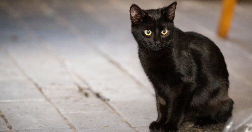 Mystery note's worrying Halloween warning for black cat owners