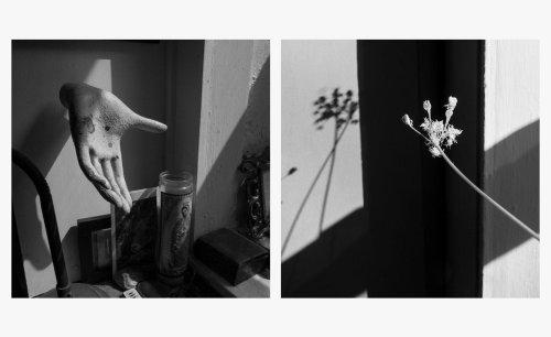 Photographer Larry Fink's lockdown diaries