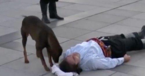 Allongé par terre, un acteur fait semblant d'être blessé : tout d'un coup, un chien errant arrive et tout bascule !