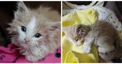 Elle passe la nuit à câliner un chaton condamné, le lendemain un miracle se produit (Vidéo)
