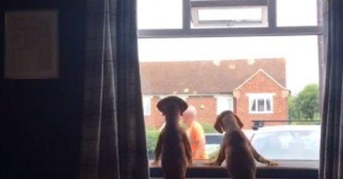 L'éboueur s'approche de deux chiens à une fenêtre : le maître pleure en voyant ce qu'il fait (Vidéo)