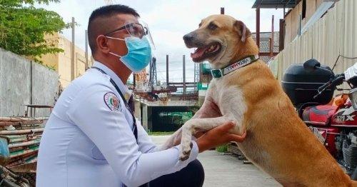 Un chien entre dans un centre commercial : ce que fait l'agent de sécurité laisse tout le monde bouche bée ! (Vidéo)