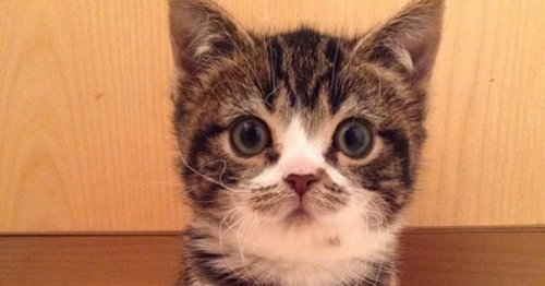 Ils adoptent 2 chatons atteints de nanisme : jamais ils n'auraient imaginé ce qui allait arriver…