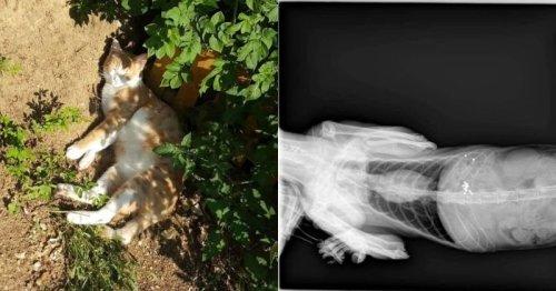 Il emmène son chat blessé chez le vétérinaire : ce qui s'affiche à l'écran de la radio est un choc (Vidéo)