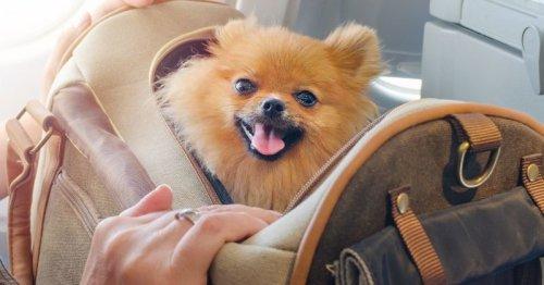 Fortes chaleurs : son chien Spitz meurt dans un train en panne entre Narbonne et Béziers