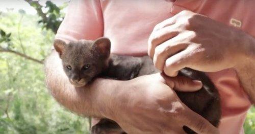 Il recueille un chaton errant, quelques jours plus tard il est stupéfié d'apprendre que ce n'est pas un chat (vidéo)
