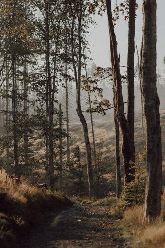 Spooky Hřensko: Eine Herbstwanderung durch die Edmundsklamm