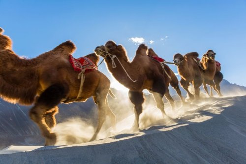 Quiz: Domestic animals of the world