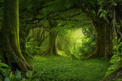 The World's 7 Most Amazing Forests