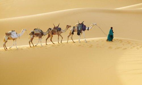 'I crossed the Sahara by camel'