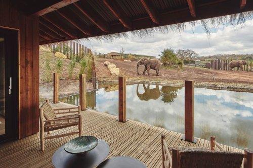 5 of the UK's best safari lodges