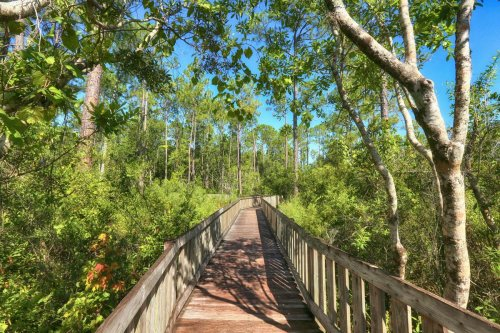 7 things to do in Orlando (that don't include Disneyland!)