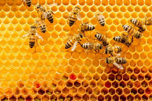 The plight of the honey bee in northern Italy