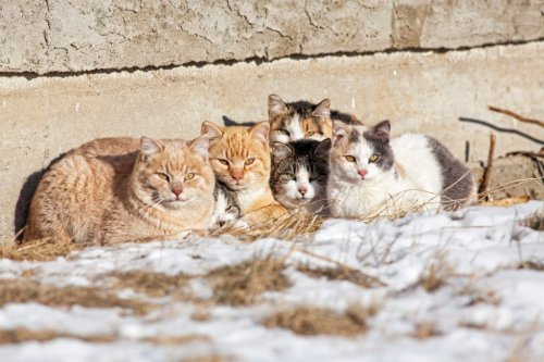 We Finally Know How Many Cats Live in DC