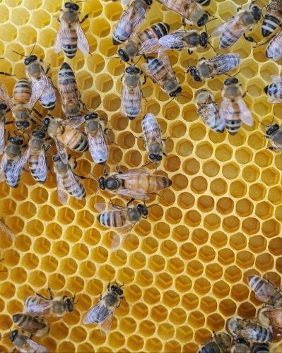 Now at National Harbor: Bees. Lots of Bees. | Washingtonian (DC)