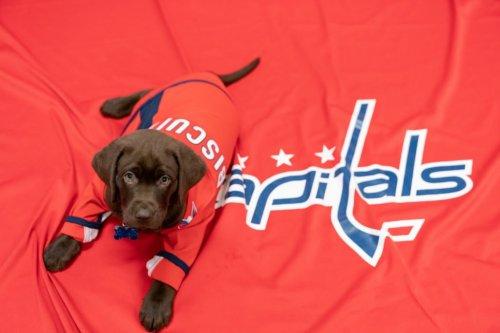 The Washington Capitals Have a New Team Puppy   Washingtonian (DC)