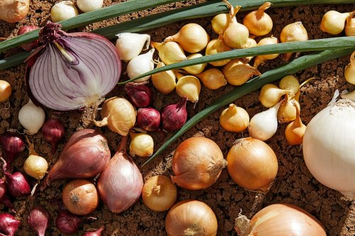 Onions, shallots, scallions and leeks are mostly interchangeable in recipes. Here's how to use what you have.