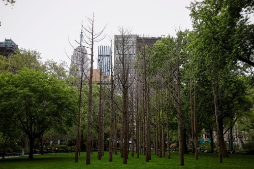 Artist Maya Lin creates a 'Ghost Forest' in New York