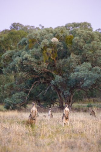 'Kangaroos Are Not Shoes' campaign lands awkwardly in Australia's outback