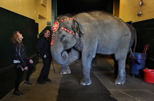 These elephants have been retired from the circus. But are their lives better?