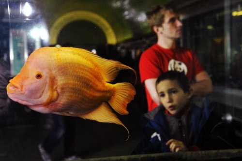 Hackers used a fish tank to break into a Vegas casino. We're all in trouble.