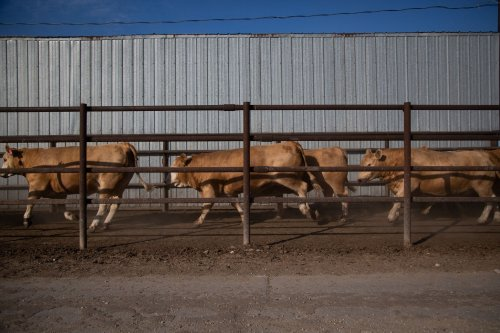 Opinion: Ditching meat isn't the answer for climate change. Better farming is.